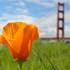 City Nature Challenge S.F. vs L.A. icon