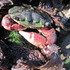 Duxbury Reef Intertidal Biodiversity Project icon