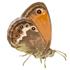 Le farfalle della Toscana insulare e costiera icon
