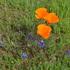 Pearson-Arastsradero Preserve Herbarium Project icon