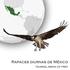 Aves rapaces diurnas de México icon