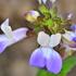 Flora of Swantonia icon