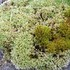 Mosses and Lichens in Switzerland icon