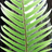 Sword fern and emily   copy