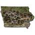 Reptiles and Amphibians of Iowa icon