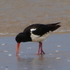 Birds On Beaches NZ icon