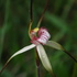 Orchids of Tasmania icon