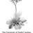 Herbarium logo dionaea