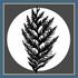 Cedar Watch icon