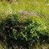 Flora Íslands icon