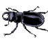 Insects of Walton County icon