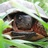 Wood turtle fenton icon