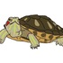 Tracking Terrapins in Cambridgeshire icon