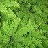 Missouri Plants icon