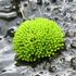 Moss Flora of Indonesia icon